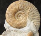 AMMONITE 'TOWER' - JURASSIC, SKYE.